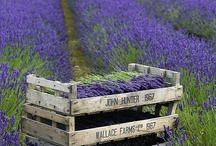 Place of Birth: Provence