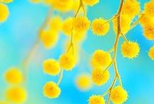 Sunny yellow inspiration