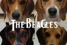 I Love Beagles / by Colleen Owens