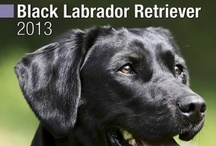 I Love Black Labs!! / by Colleen Owens