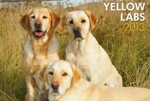 I Love Yellow Labs!! / by Colleen Owens