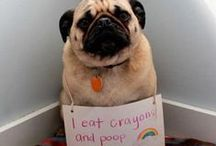 Animal Shaming / by Colleen Owens