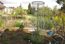 Gardening Tips & Tricks / Ask us! We offer individualized solutions to your garden questions.