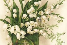 Lily of the Valley / by Donna Knutson