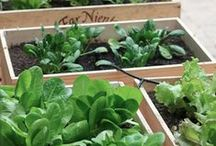 Frugal Garden and Home Decor / Neat ideas to lighten your garden, backyard or home made from reusable materials