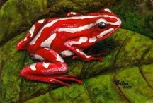 Frogs, Birds, Turtles & Reptiles / I love frogs, I used to have pet tree frogs. They are beautiful! / by Stephanie Woodland