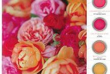 CoLoUr My WoRLd / Colour & Pretty pictures