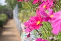 Garden Goodness / by Vicki Horton