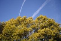 Umwelt & Natur  / Aufnahmen von Natur und Umwelt