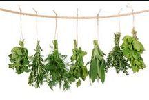 ~ Herbs ~
