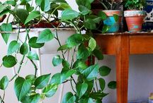 Garden + Plants