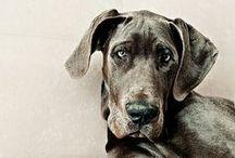 """""""Hound Dog"""" Elvis Presley / by Ashley Gilson"""