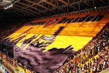 Fanseite über Dynamo Dresden / Alles über meinen Heimatverein