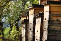 Epic Beekeeping / Beekeeping advice for all the world's bee-lovers, keepers, and enthusiasts.