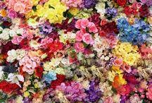 Flower Power / by Shelz Smith