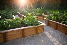Vegetable Garden / by Lauren Lynch