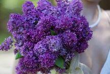 Color me Purple...Wedding