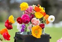 Flores em Você (Flowers)