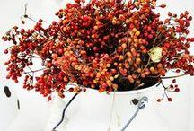 S E A S O N A L | herbstliebe / Eine Lieblingsjahreszeit: Herbst.