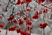 S E A S O N A L | winter wonderland