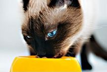 DG Pet Center / You love your dog or cat like a member of the family, so check out the tips and expert advice we've gathered on caring for your pets.  / by Dollar General