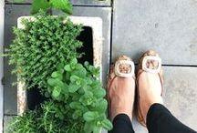 G R E E N | Urban Jungle Bloggers / Leben mit Grün mitten in der Stadt? Das geht! Inspiration und Tipps in diesem Board.