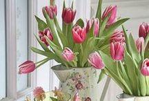 Easter & Spring / by Olivia Fisk