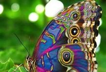 Butterfly Beauties / by Olivia Fisk