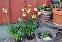 Roliga växter/lovely plants