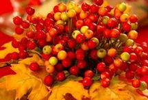 Holiday Goodness  / by Coffee And Kahlua