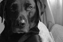 Dog lover♥