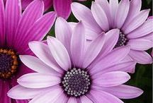 Flowers...Purple-Lavender