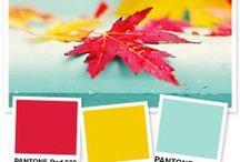 Cardzzz...Color Palettes / by Cat o phile