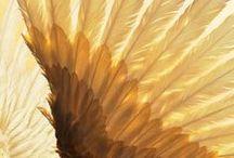 a n g e l . w i n g s / Angel wings...oh how I wish I had angel wings!