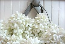 { cottage style } / The cottage and guest house ..... / by Summertime Cottage