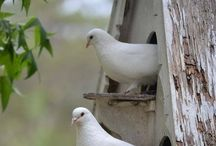 { birds } / Birds  / by Summertime Cottage