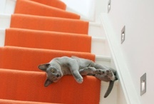 Steps and Stairs / by Farrer Coston