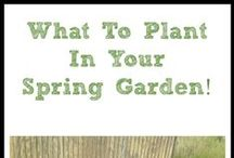 Gardening Ideas / by Mindi Cherry