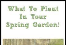 Gardening Ideas / by Mindi Cherry