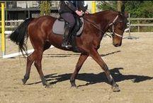 Flirtatious (Flirt) / my 6 year old Arabian x thoughbreed x Stationbreed mare