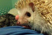 Hedgehog Love / by Emily King