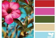 Color Combo Mambo / Color pairing and palettes.