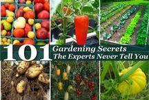 plants/gardening / by Sharon Prisk