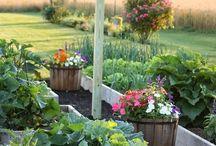 Garden / by Kristin Moody