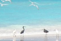 •.★* Beach & Sea•.★* / ♫♥♫♥ Happy Pinning ♥ Karin ♥♫♥♫♥  / by ~✿~  Karin D.~✿~