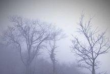 Fog / by Rikki Fowler