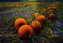 Autumn / by Rikki Fowler