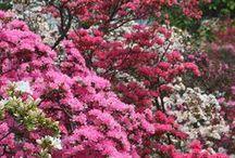 Spring / by Rikki Fowler