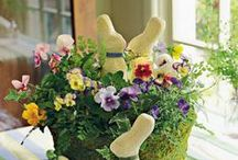 let's celebrate easter/spring / by Cynthia Monroe