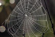 Spider Webs / by Rikki Fowler
